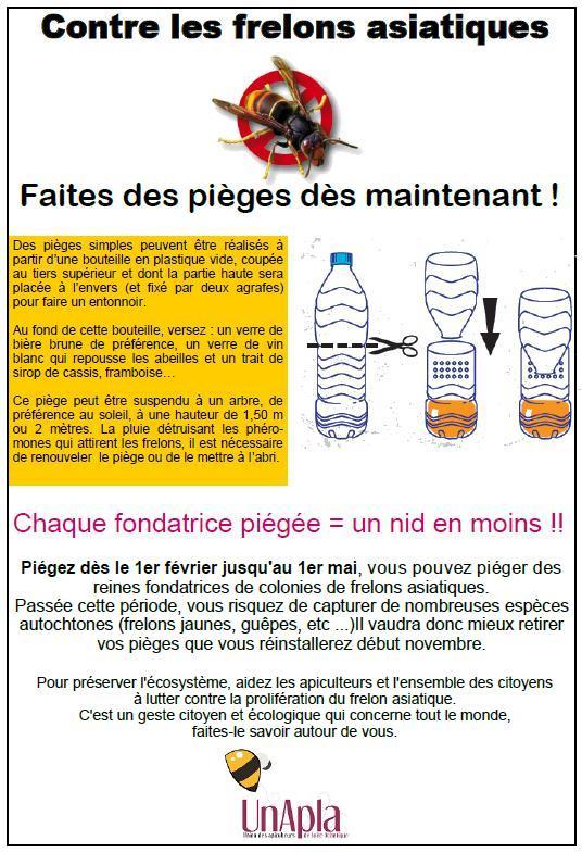 Piegeage-Frelon